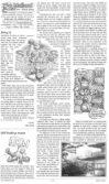 Read more about the article The Mallard (mini) March 2021